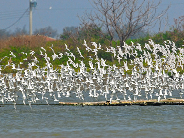 Flocks of migratory birds