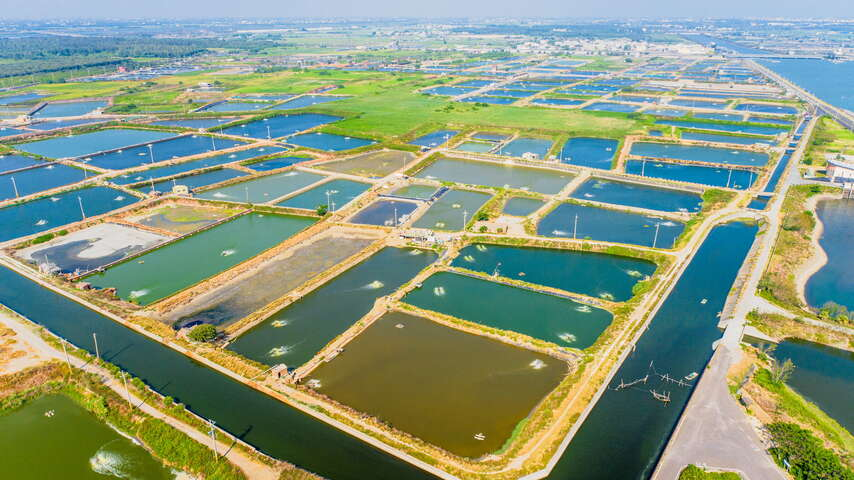 Bird's eye view of Aogu Wetlands