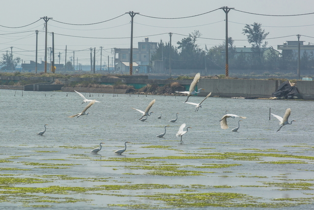 Birds in Aogu Wetlands